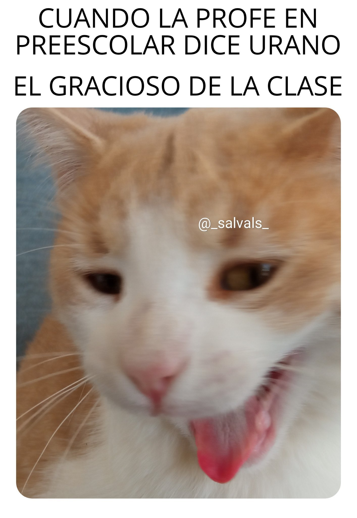 Mi meme uwu