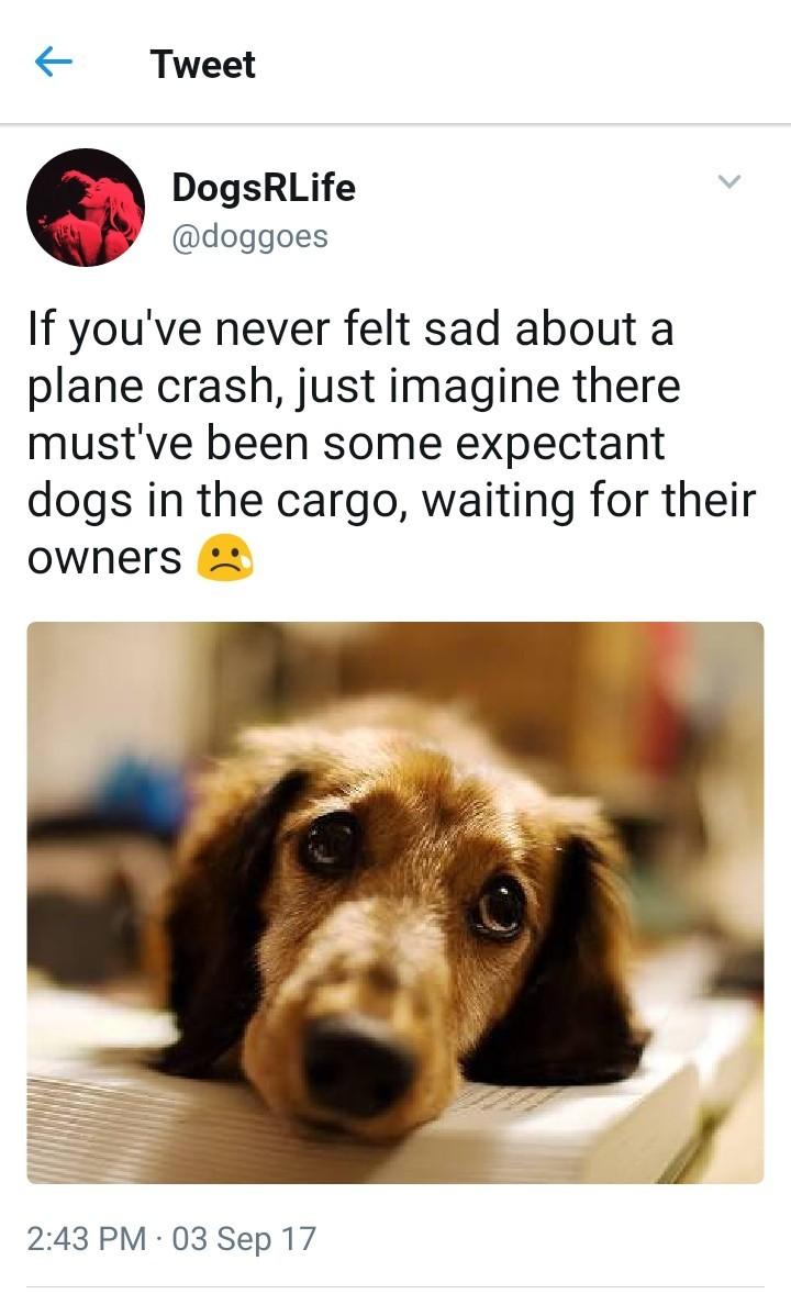 Poor doggos - meme