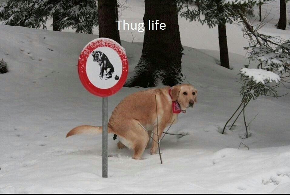 Thuf life - meme