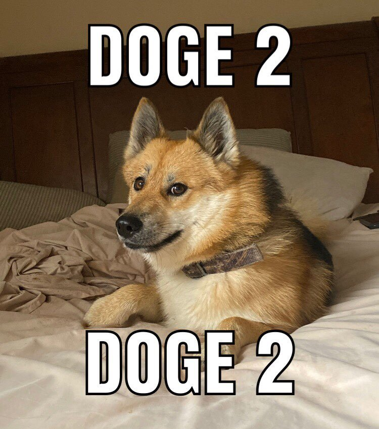 DOGE 2 - meme