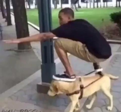 the dog rider - meme