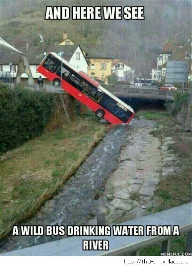 A wild bus appeared - meme