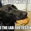 The doggo lab