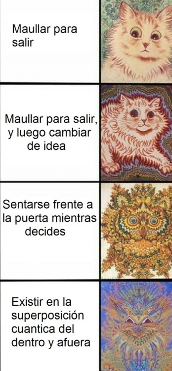 hermosos y malditos gatos - meme