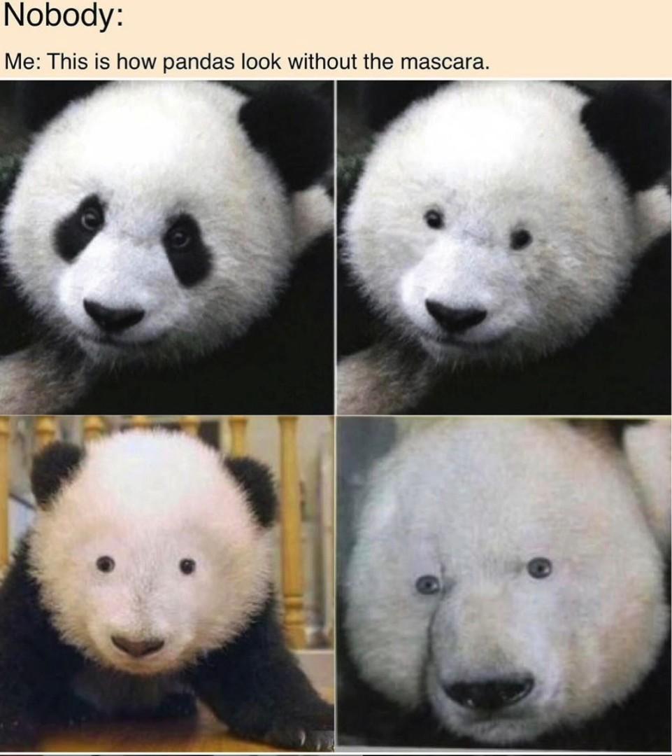 Pandas sem delineador - meme