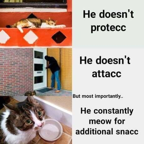 all the snaccs - meme