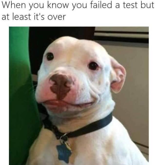 The Best Pitbull Memes Memedroid