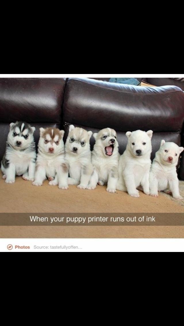 puppies - meme