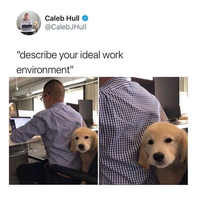 Describe your ideal work environment - meme