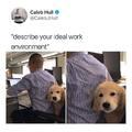 Describe your ideal work environment