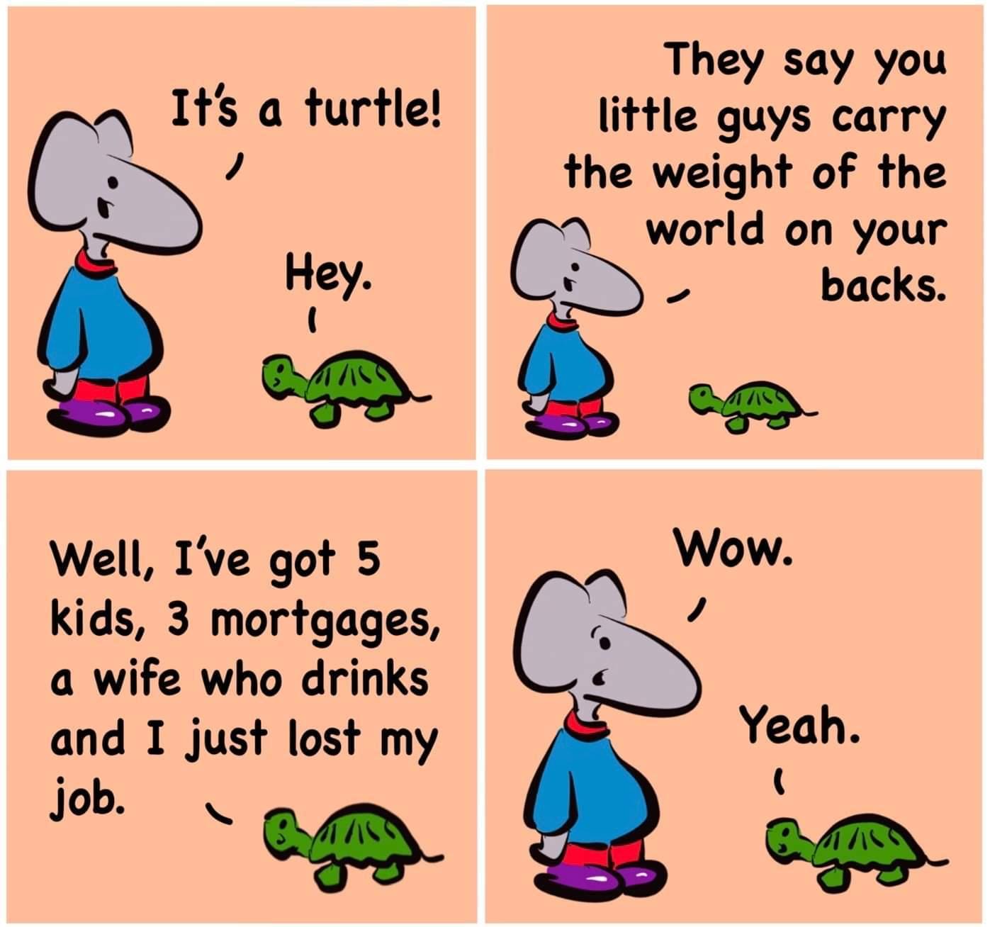 Turtle - meme