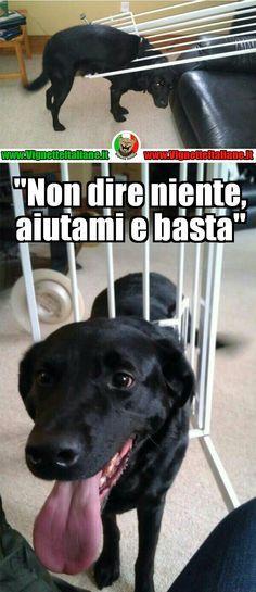 Il cane imbranato - meme