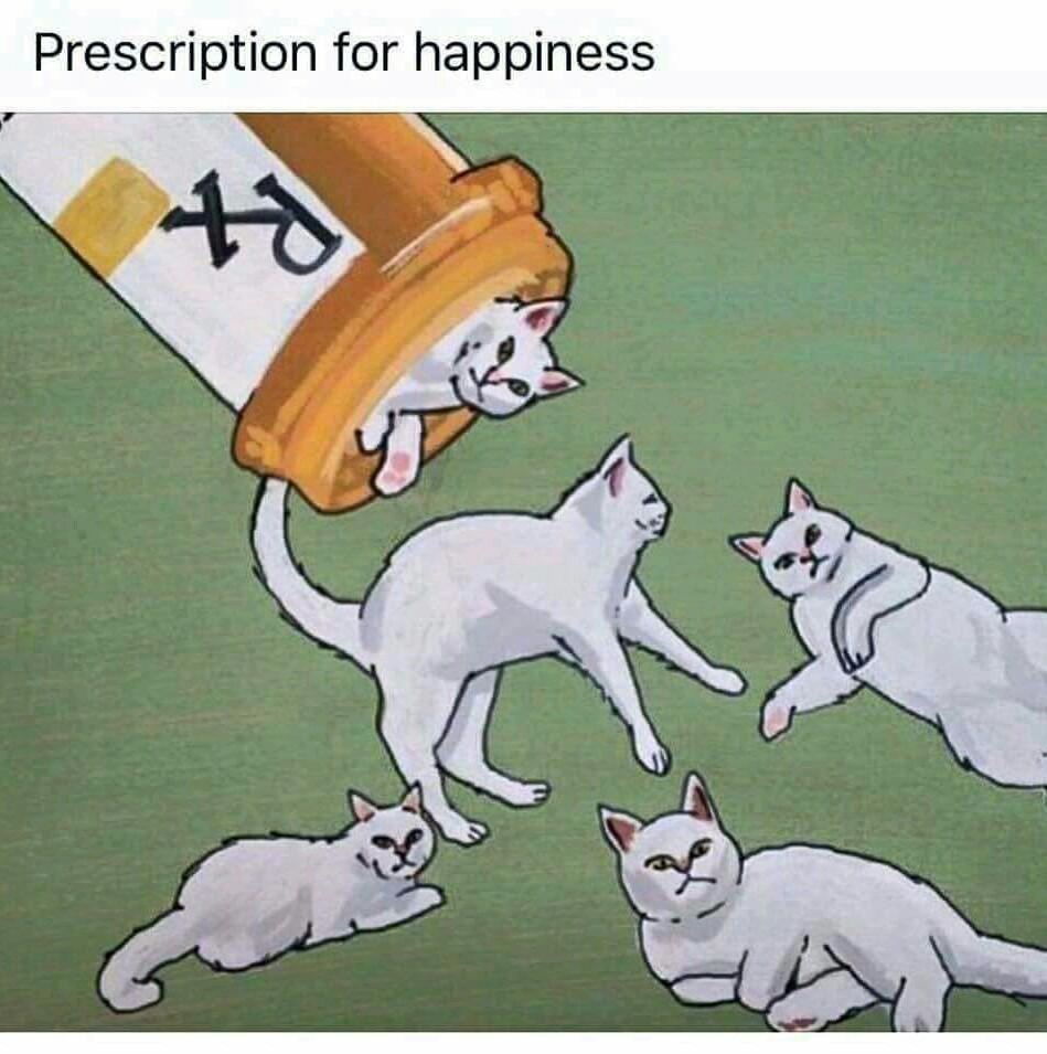Meow meows - meme