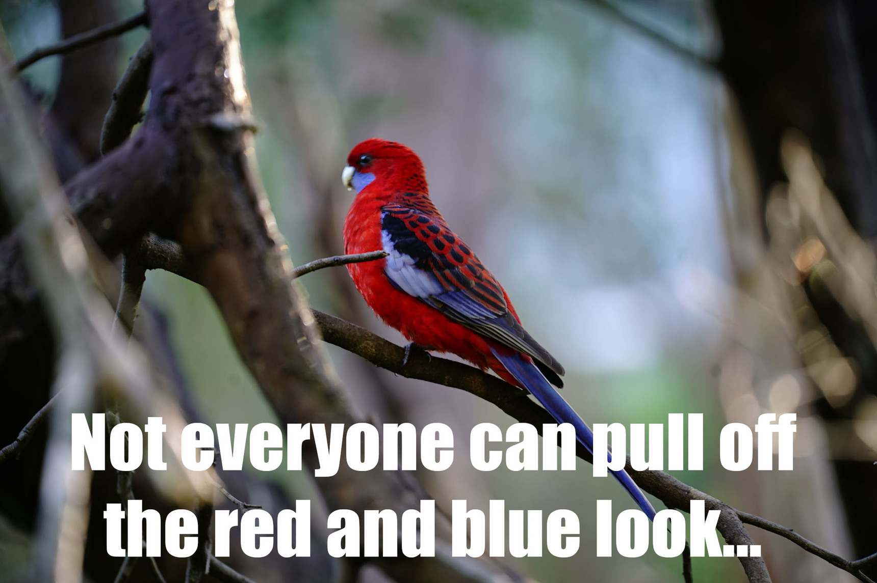 Red and Blue - meme