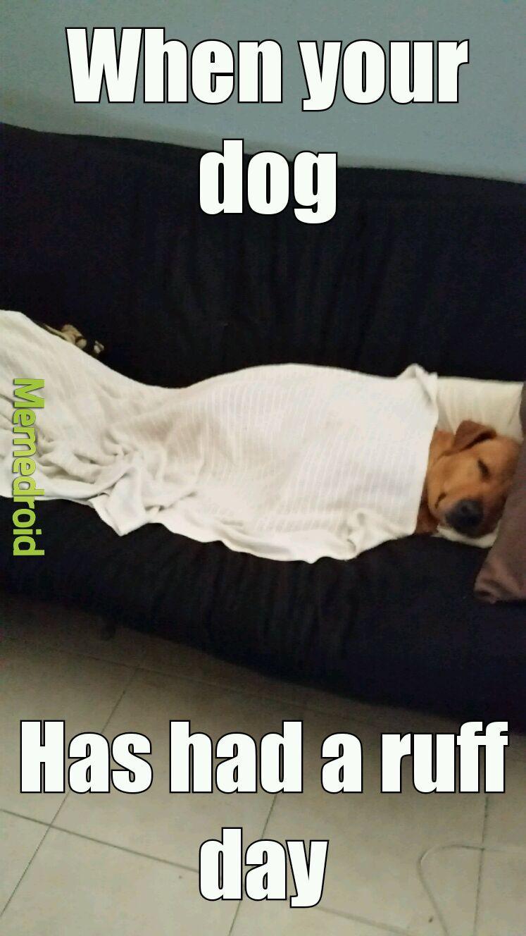 Sleepy doggo - meme