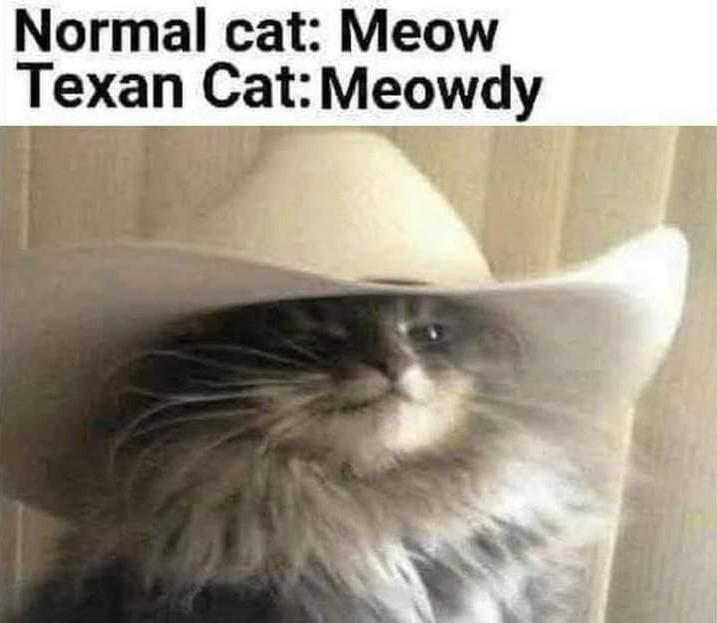 Cat wink - meme