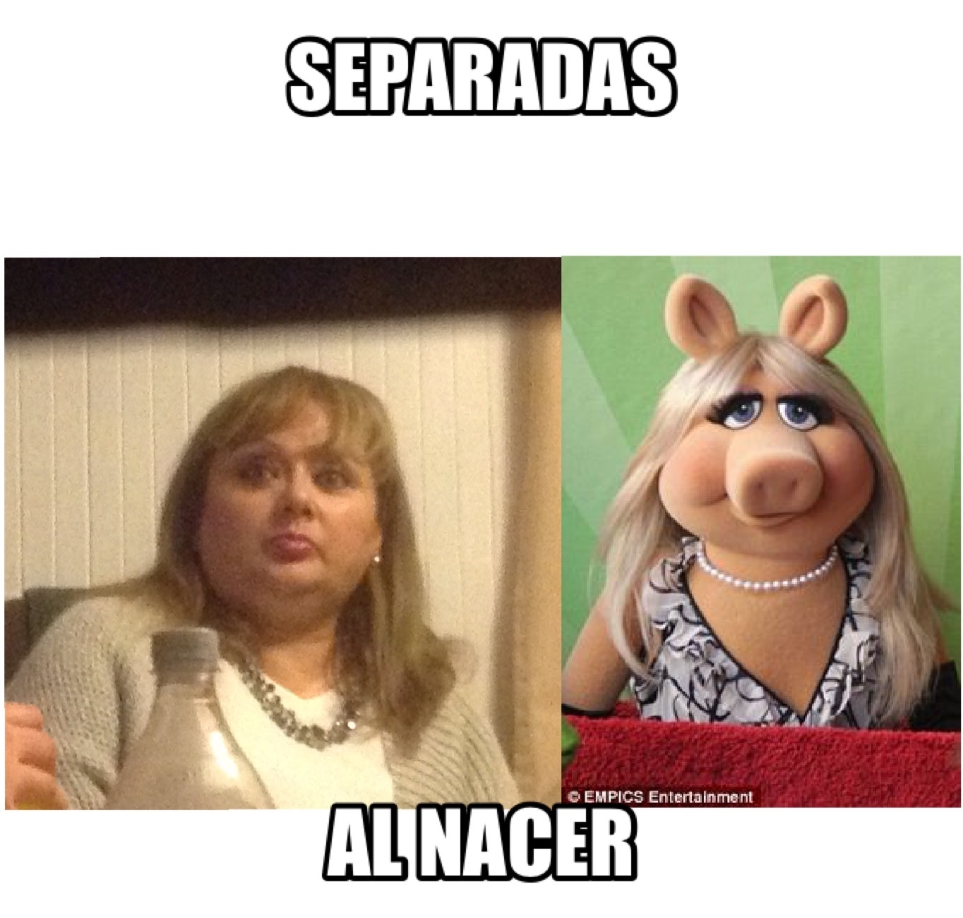 Omaiga la chanchita piggy 2.0 (la vi en vida real :v) - meme