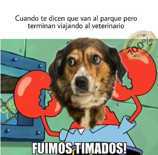 Pobre perrito - meme