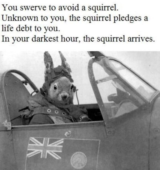 In your darkest hour, the squirrel arrives - meme