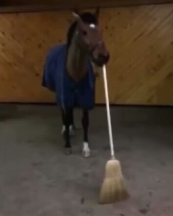 Limpieza - meme