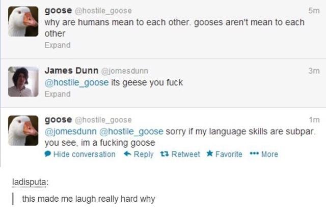 Fucking Geese.... - meme