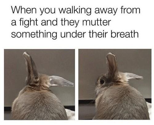 Rabbit - meme