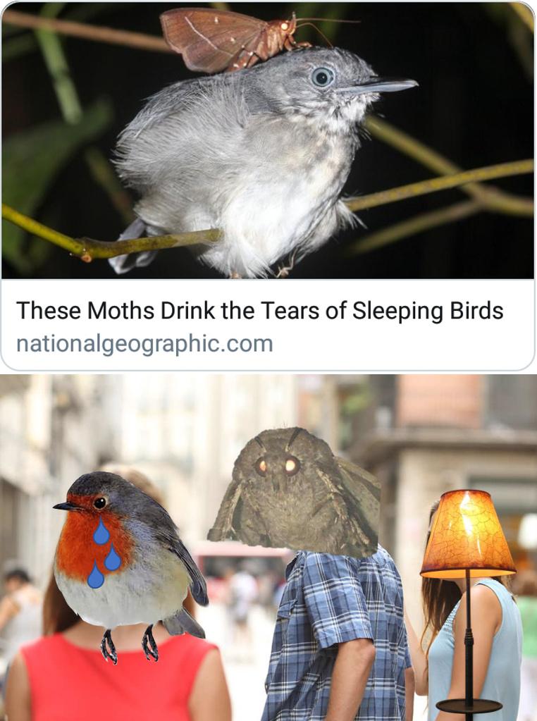 The Moth Meme Rises