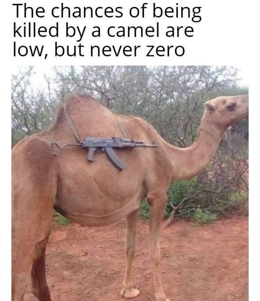 A chance de ser morto por um camelo é baixa, mas não zero. - meme