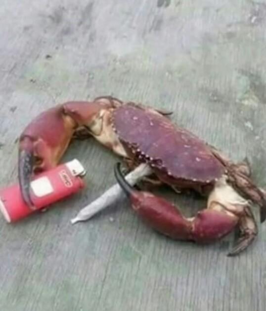 más animales fumando - meme