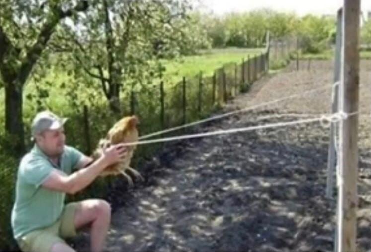 Bastidores de A fuga das galinhas - meme