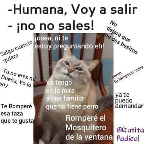 Maldito Humano - meme