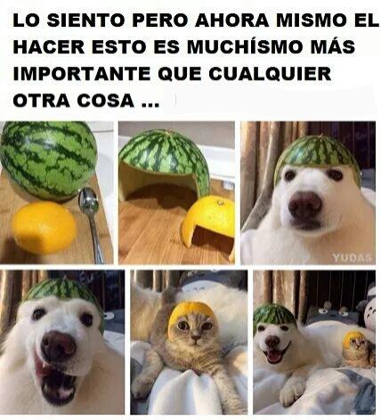 *-* - meme