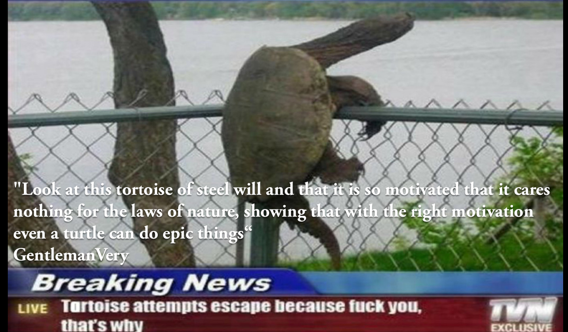 Rebel turtle shows us that with the right motivation nothing can stop you. - meme