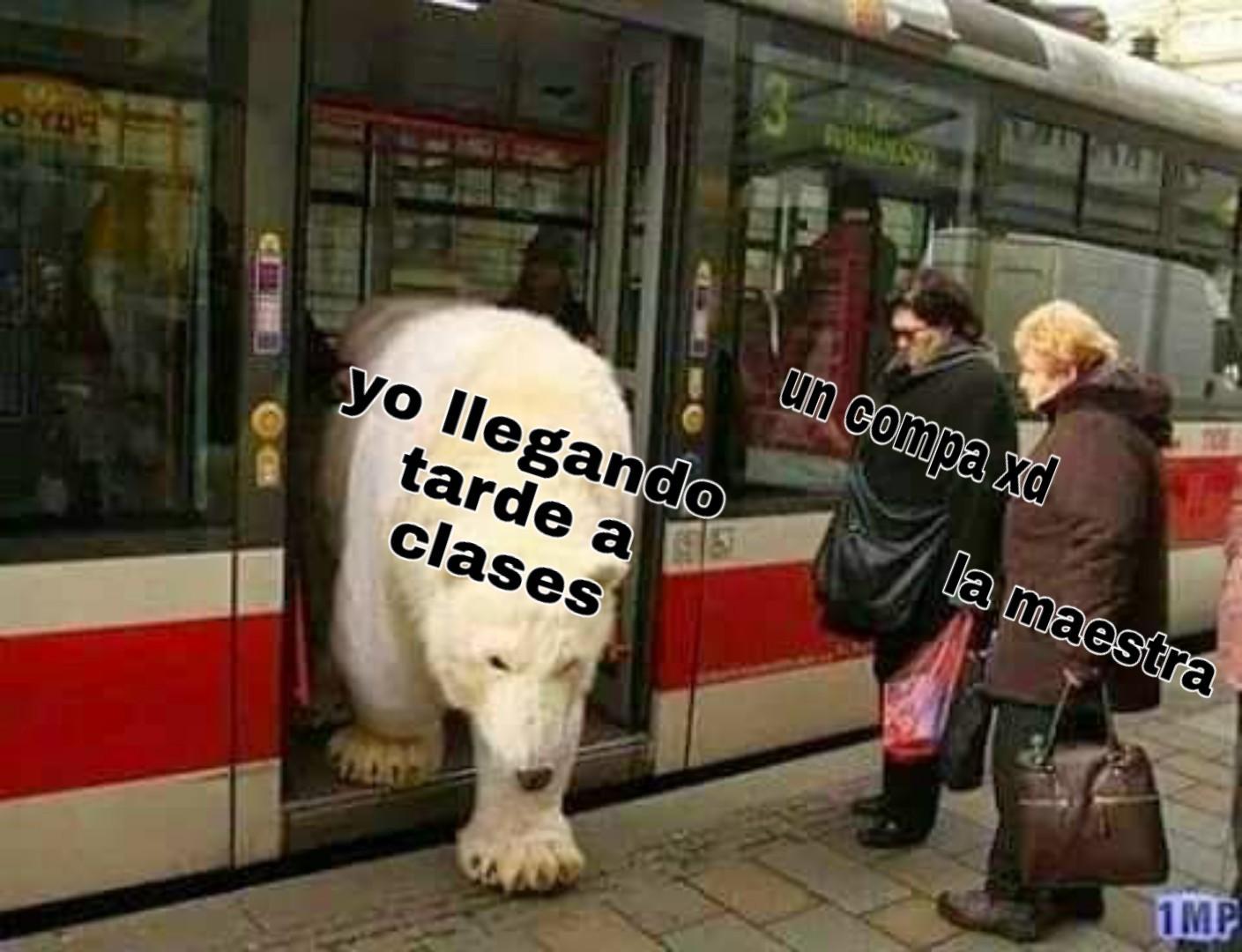 Ajaj polar - meme