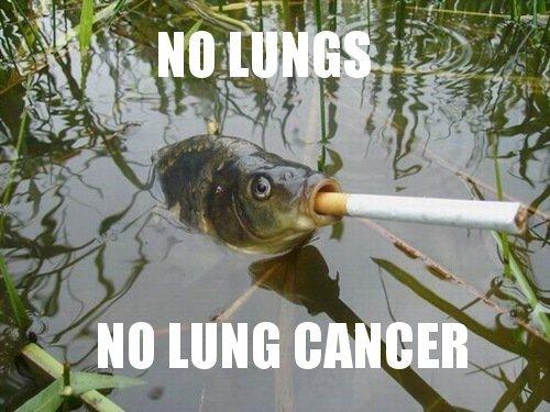 No puns - meme