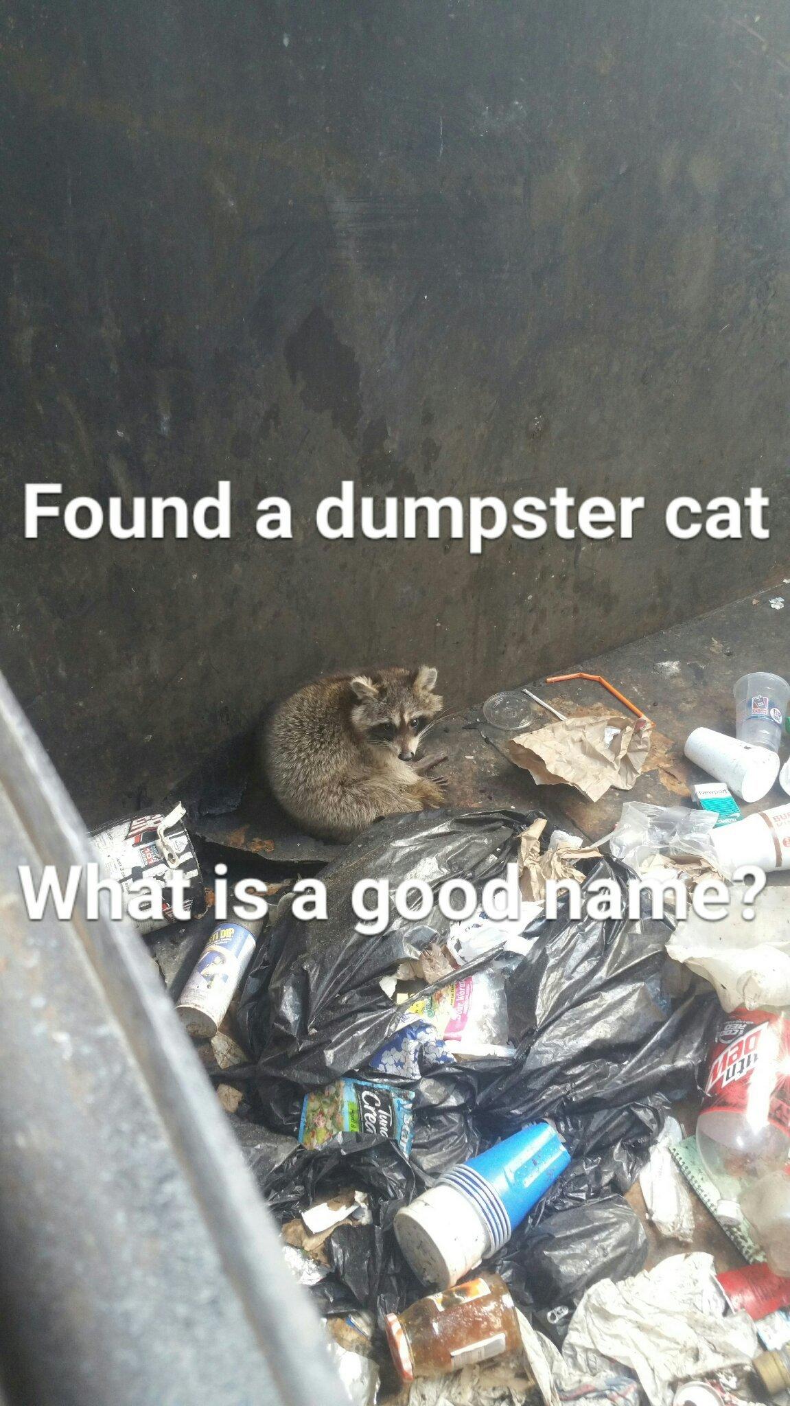 Dumpster cat - meme