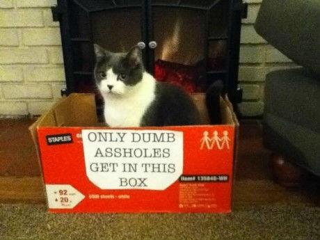 pussycat - meme