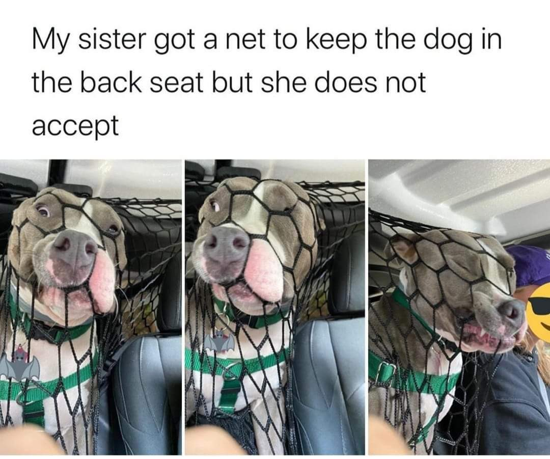 Every dog - meme
