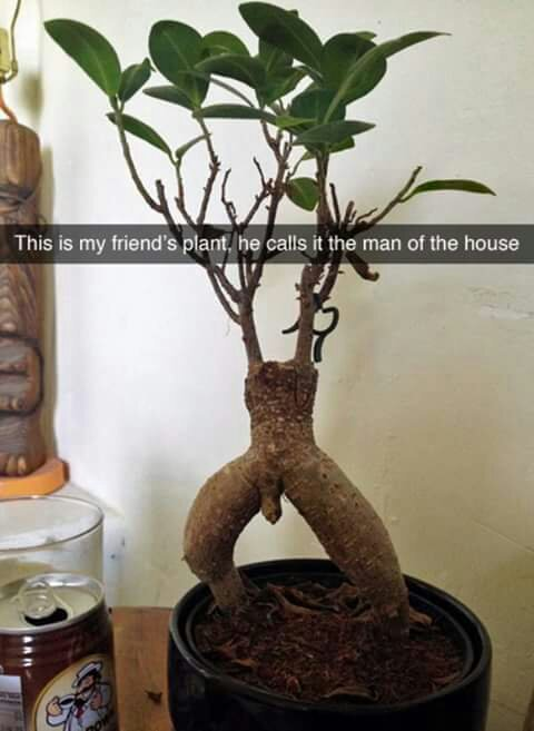 Ayyyee guess what just became my favorite plant - meme