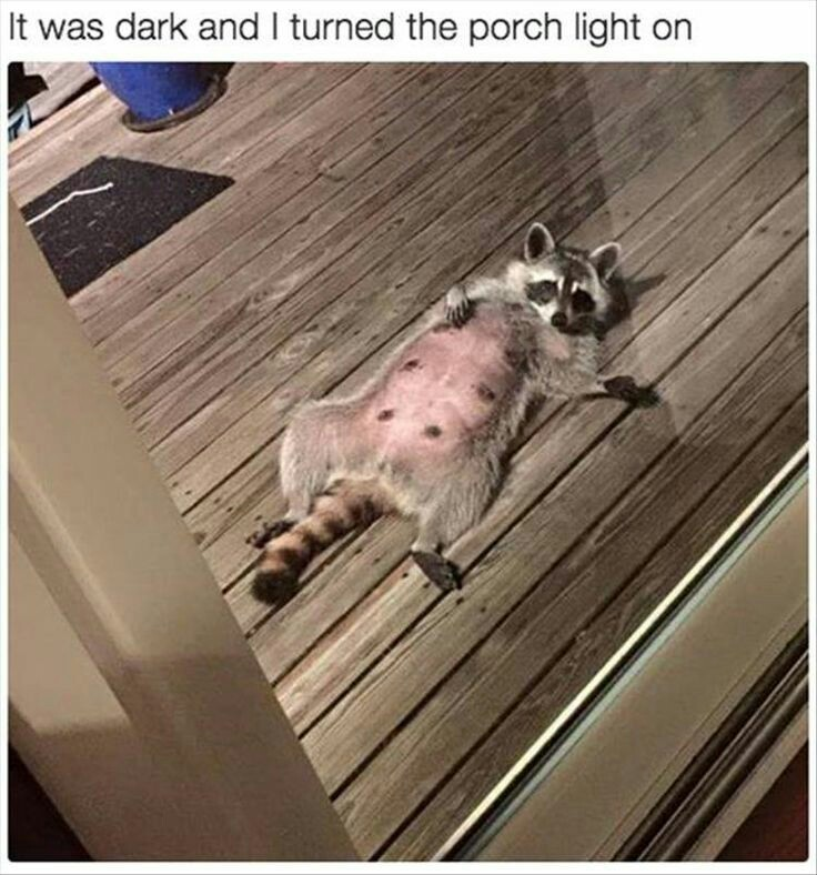 Draw me like one of your French girls, human - meme