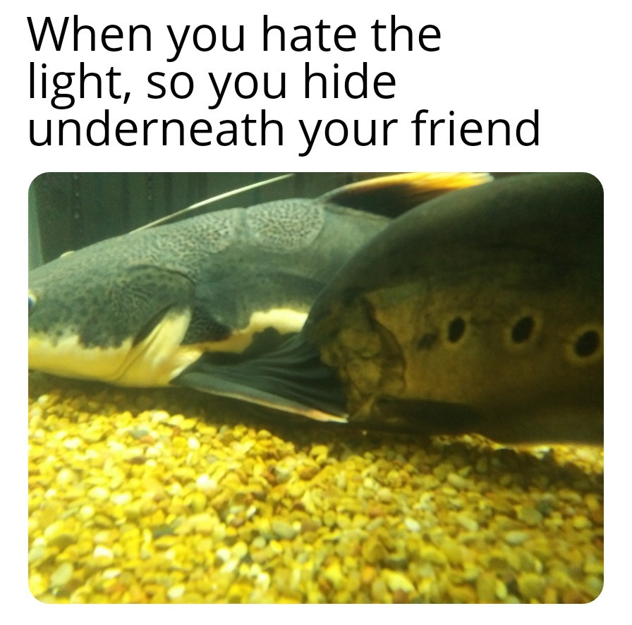 When you hate the light..so you hide underneath your friend - meme