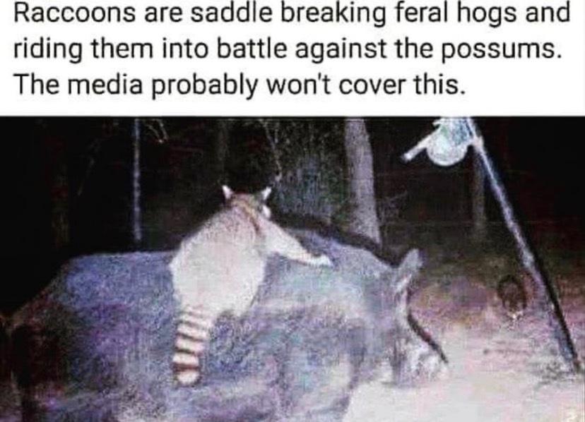 Raccoons - meme