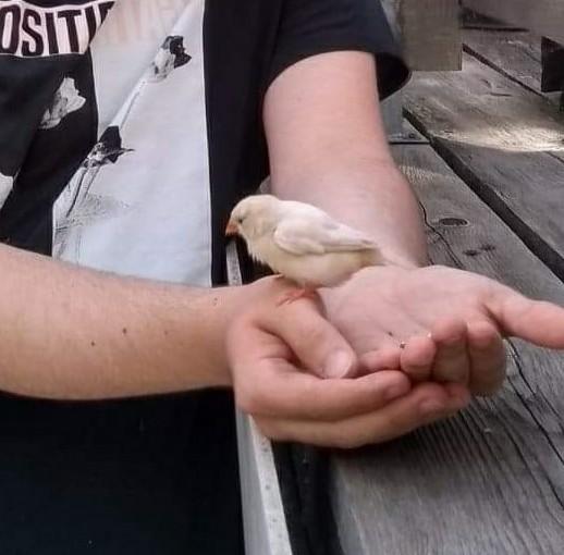 I am the choosen, Bird-man is no longer bird-man, (new best day of my life) - meme