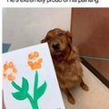 Artistic pup, right there