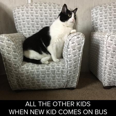 Memes Fat chonk meme