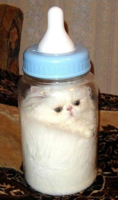 Drink Cat - meme