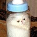 Drink Cat
