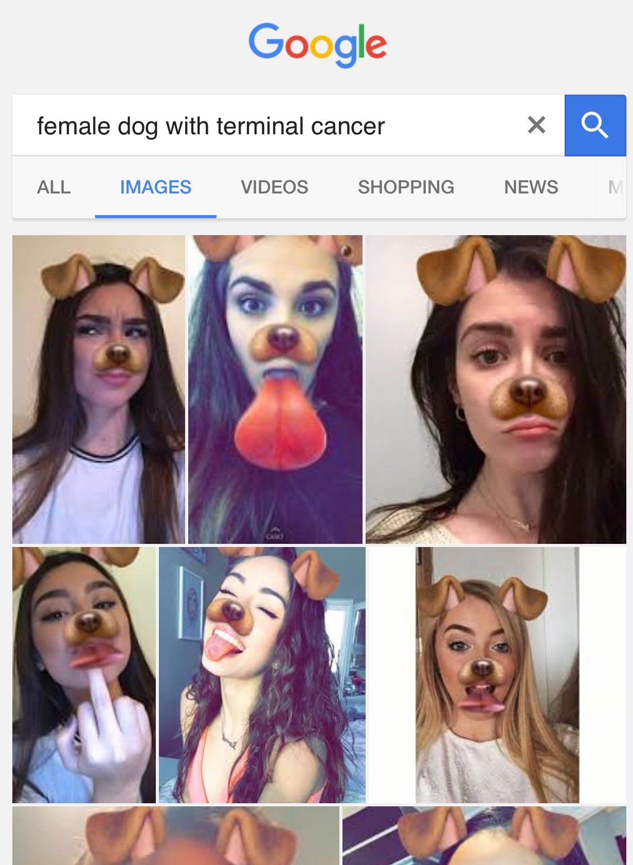 if you use the dog filter please contact a vet immediately
