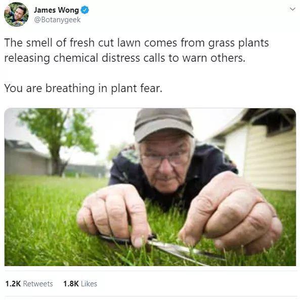grASS - meme