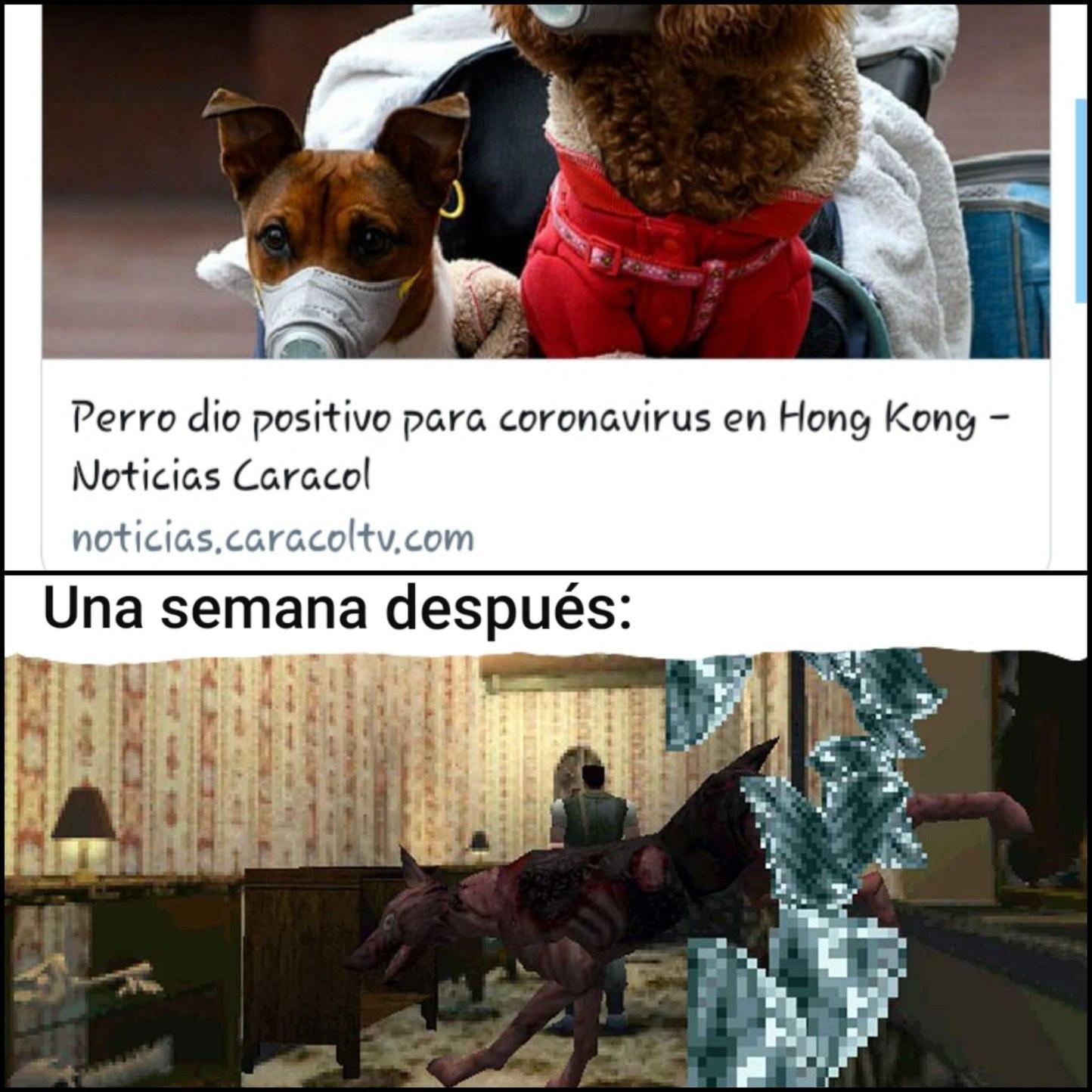 Plot twist: Se comen los perros xd - meme